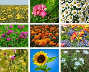 Flowers That Attract Many Beneficial Insects