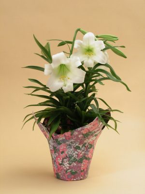 Easter Lily Gift Pot
