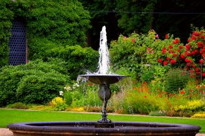 Water Fountain: Attract many beneficial insects